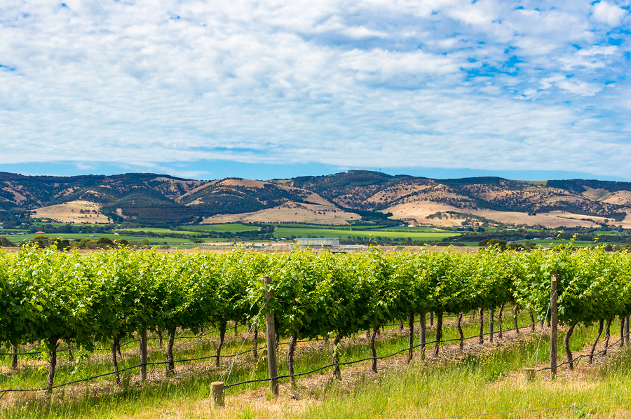 Where to find the best Australian wine: our favourite vineyards